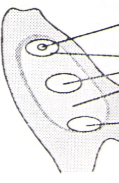word image 303