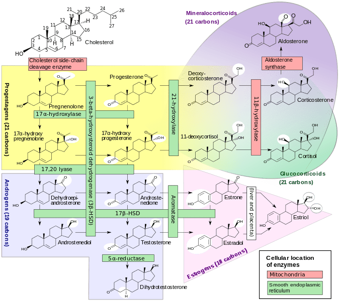 676px-Steroidogenesis.svg