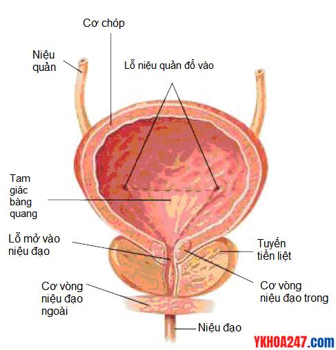 bang-quang